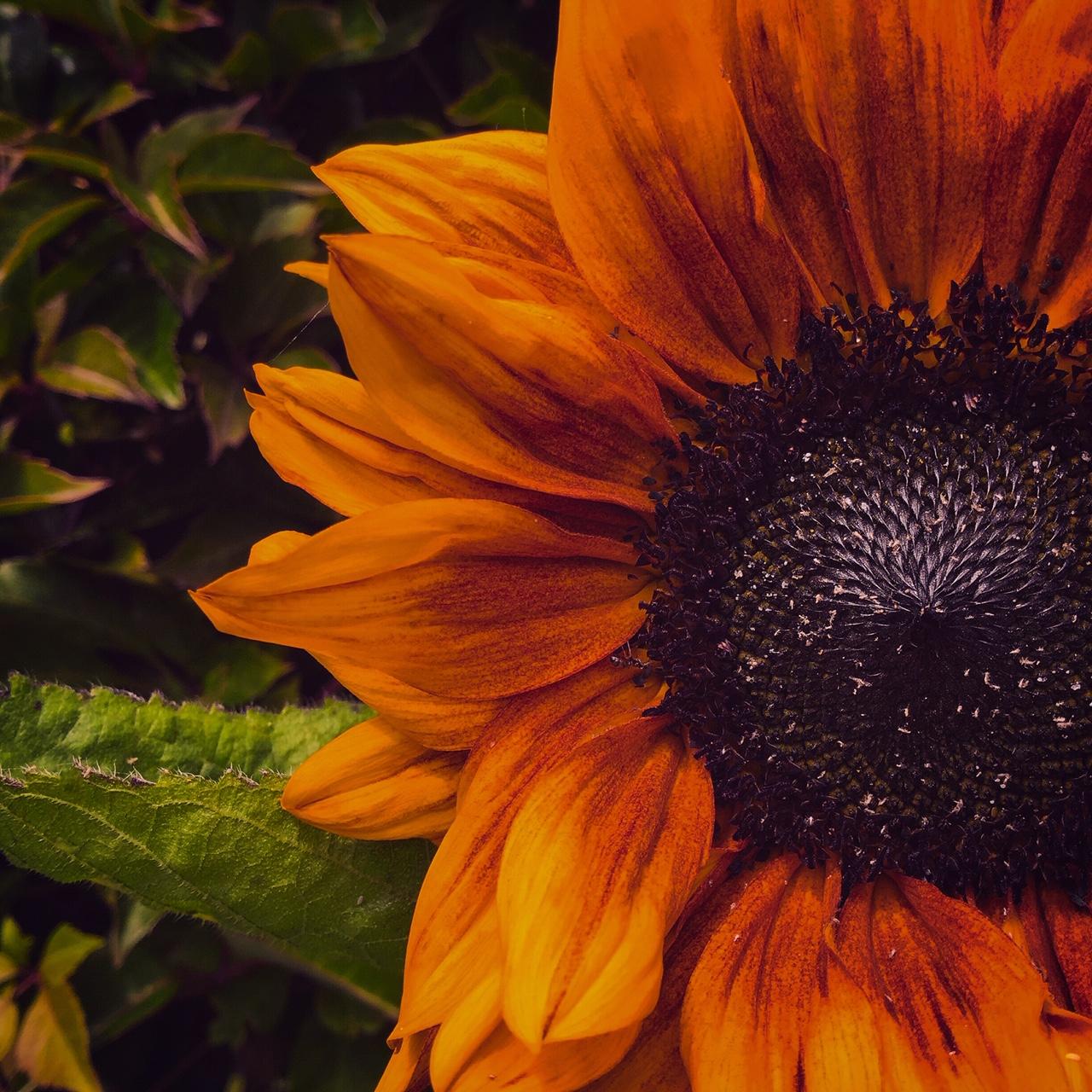 Beyond Bloom Garden Maintenance - Sunflower Petals - Streatham - London