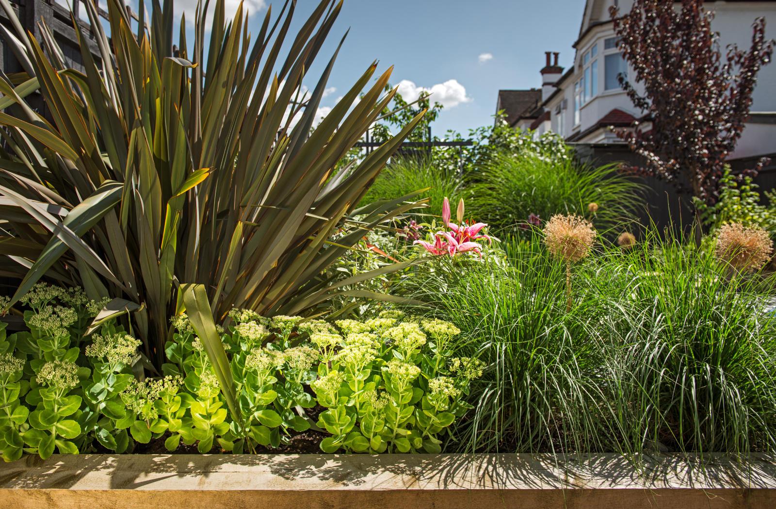 Beyond Bloom Garden Maintenance - Sedum - Streatham Hill - London
